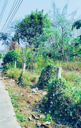 ขาย/ ให้เช่าที่ดิน ที่ดินติดถนน  2-1-30 ต.ล้อมแรด อ.เถิน จ.ลำปาง Land for sale and rent 2-1-30 Rai Lampang รูปที่ 1