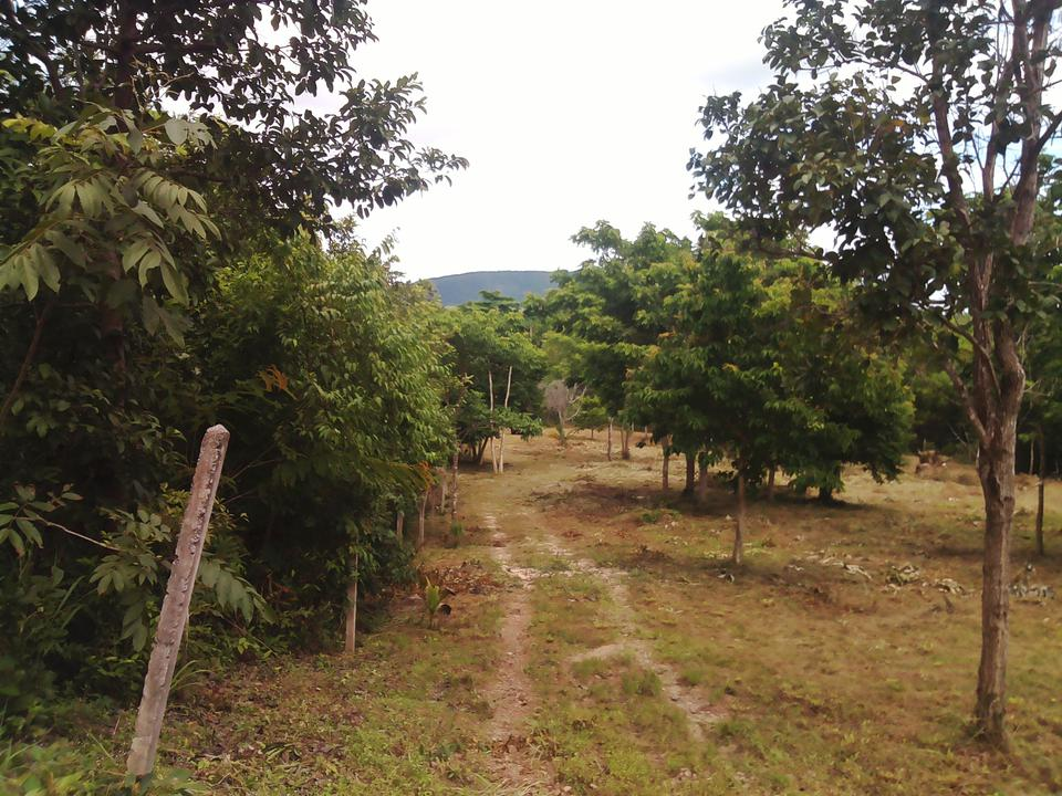 Land for sale near sea   no sea view ,very greenery and peacefully Chumphon รูปที่ 2
