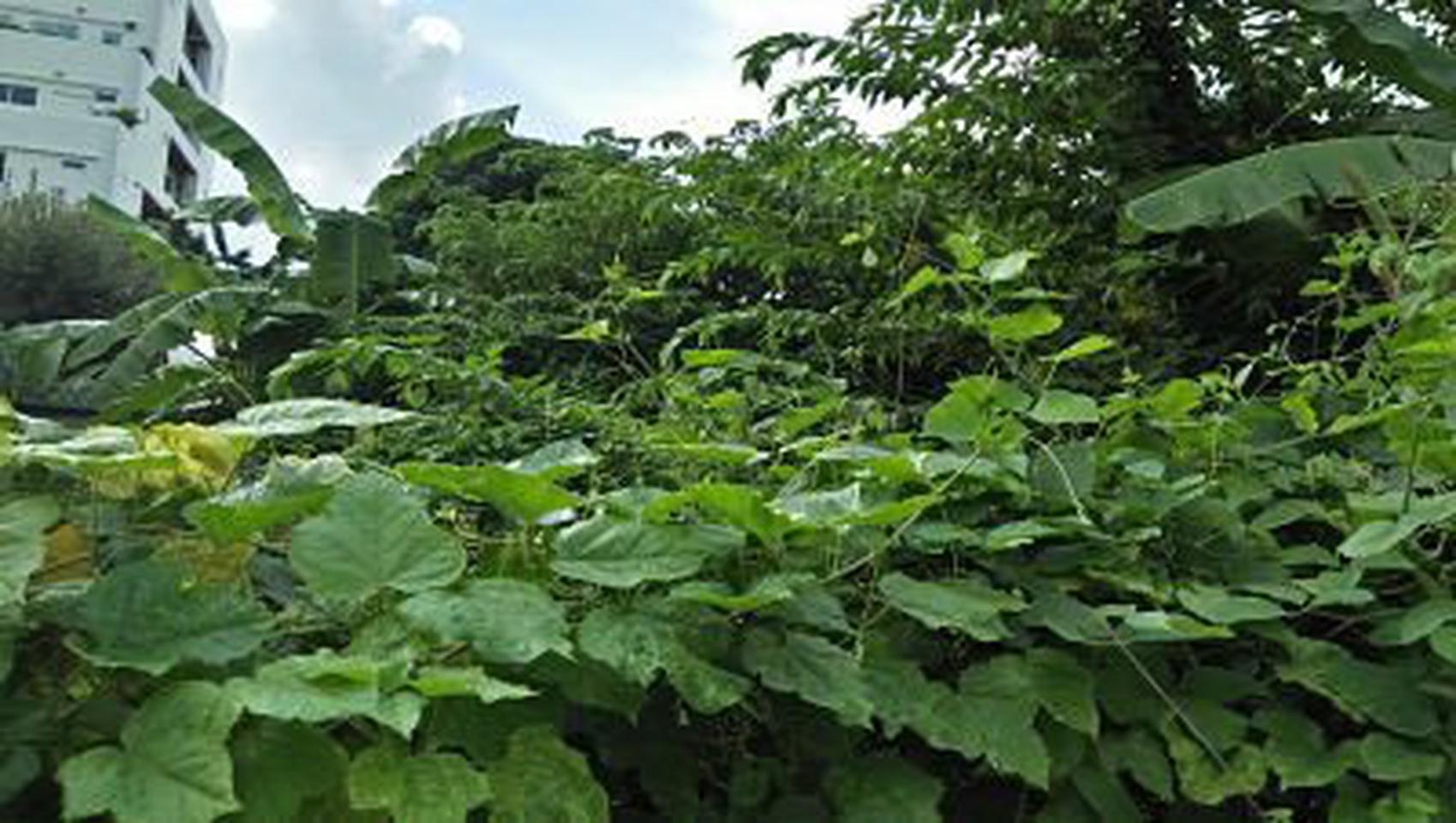 ให้เช่าที่ดินสภาพมีต้นไม้ปกคลุมเต็มติดถนนในซอย ร้อยวา เหมาะท รูปที่ 1