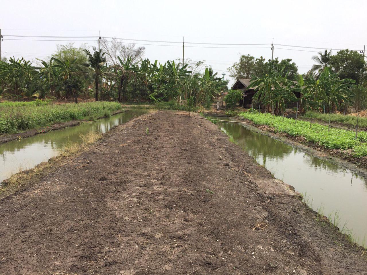 ขายที่ดินเปล่า 279 ตรว ราคาถูก บางใหญ่ นนทบุรี  รูปที่ 5