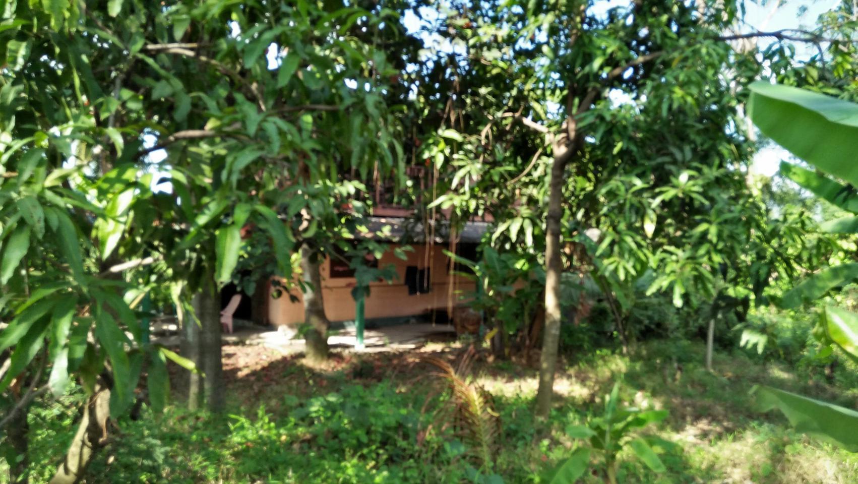 ที่ดินพร้อมบ้านเล็กๆสวนไร่กว่าใกล้แหล่งน้ำและเงียบสงบ ชานเมื รูปที่ 6