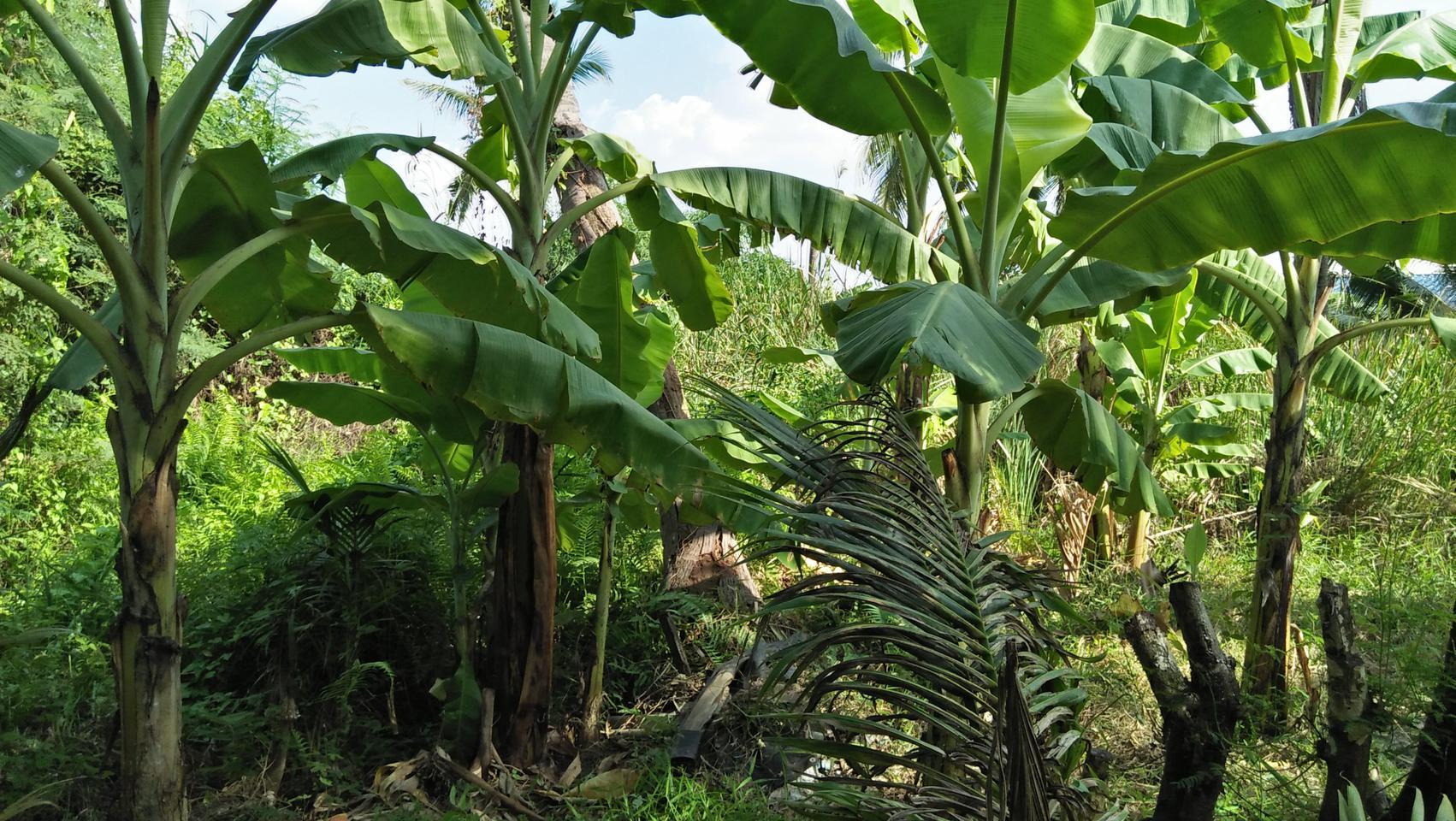 ที่ดินพร้อมบ้านเล็กๆสวนไร่กว่าใกล้แหล่งน้ำและเงียบสงบ ชานเมื รูปที่ 2