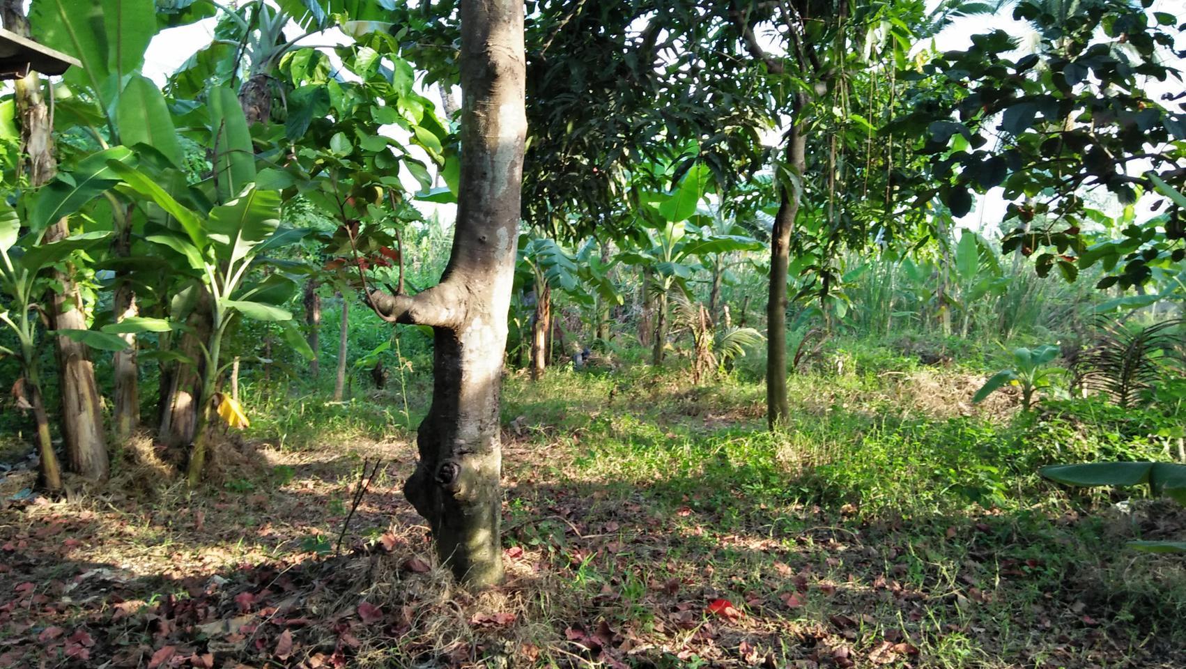 ขายสวนไร่พร้อมบ้านไม้เก่าติดลำคลอง ร่มรื่น ใกล้ถนนพุทธมณฑลสา รูปที่ 5