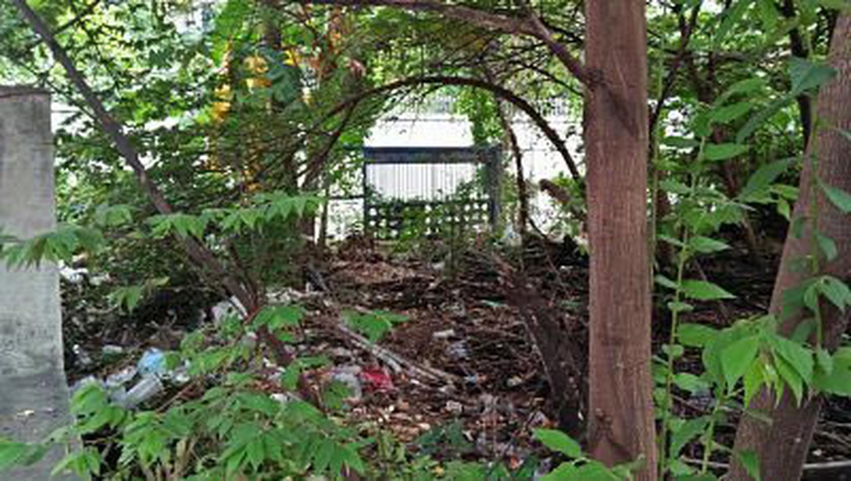 ให้เช่าที่ดินสภาพมีต้นไม้ปกคลุมเต็มติดถนนในซอย ร้อยวา เหมาะท รูปที่ 4