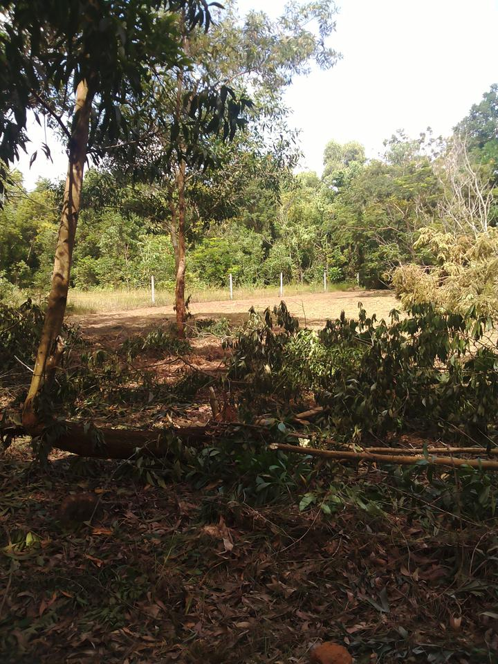 Land for sale peacefully Chumphon รูปที่ 6