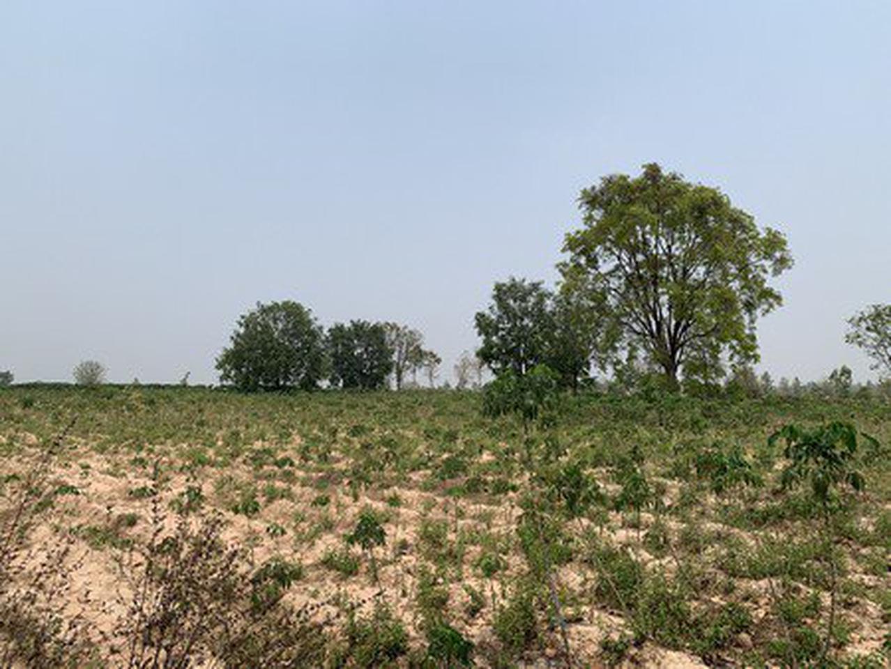 ขายที่ดินเปล่า บ้านโนนรัง จังหวัดขอนแก่น เนื้อที่ 29 ไร่ 3 งาน 30 ตารางวา รูปที่ 1