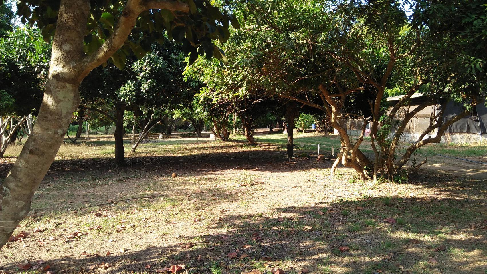 ที่ดินพร้อมสวนขนาดใหญ่ ติดห้วยลำธาร แหล่งธรรมชาติ น่าอยู่มาก รูปที่ 2