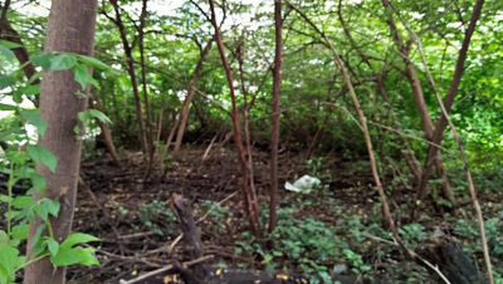 ให้เช่าที่ดินสภาพมีต้นไม้ปกคลุมเต็มติดถนนในซอย ร้อยวา เหมาะท รูปที่ 3