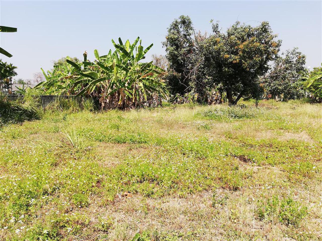 SRP02ขายที่ดินเปล่ามีเนื้อที่0-3-70.2ไร่ติดทางสาธารณประโยชน์ รูปที่ 3