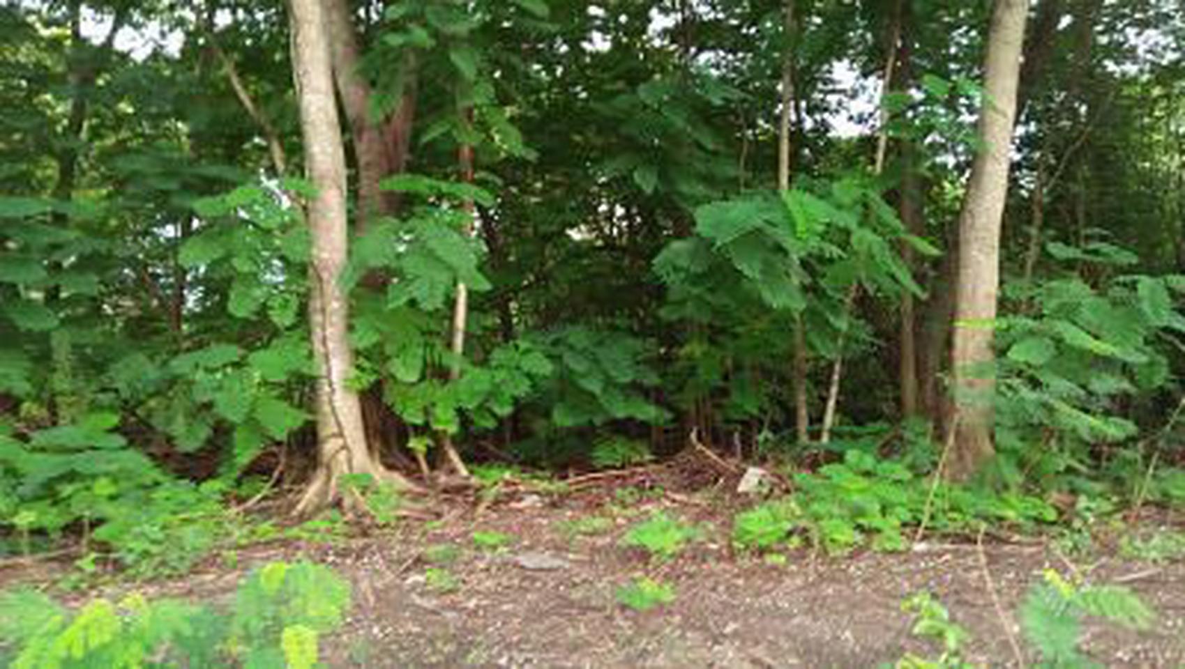 ขายที่ดิน1-2 ไร่ ภายในโครงการ รอยัล กอล์ฟ คันทรี คลับ อ่อนนุ รูปที่ 4