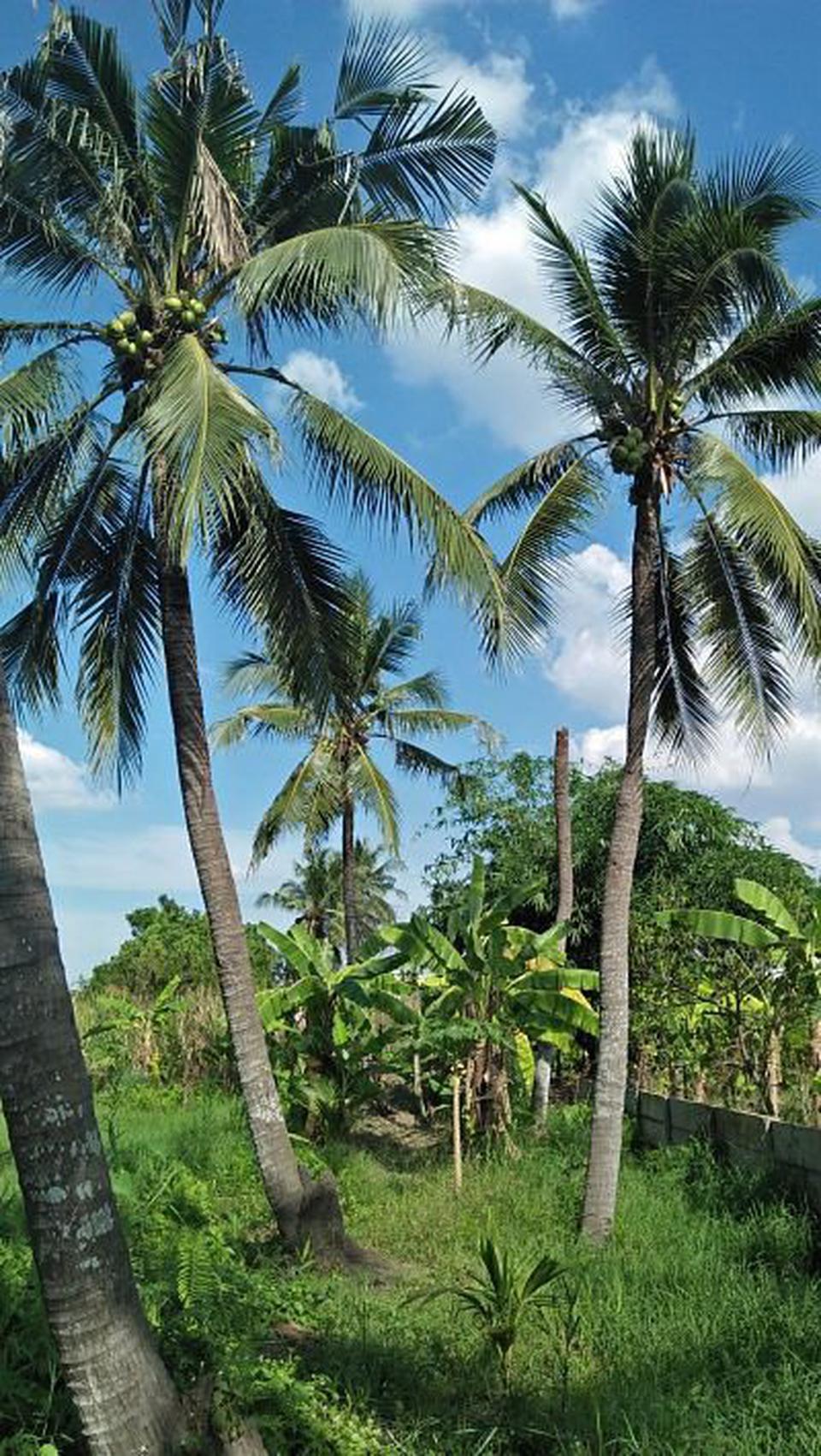 ที่ดินสวนป่าธรรมชาติติดลำคลอง ร่มรื่น บรรยากาศชานเมือง โฉนด  รูปที่ 2