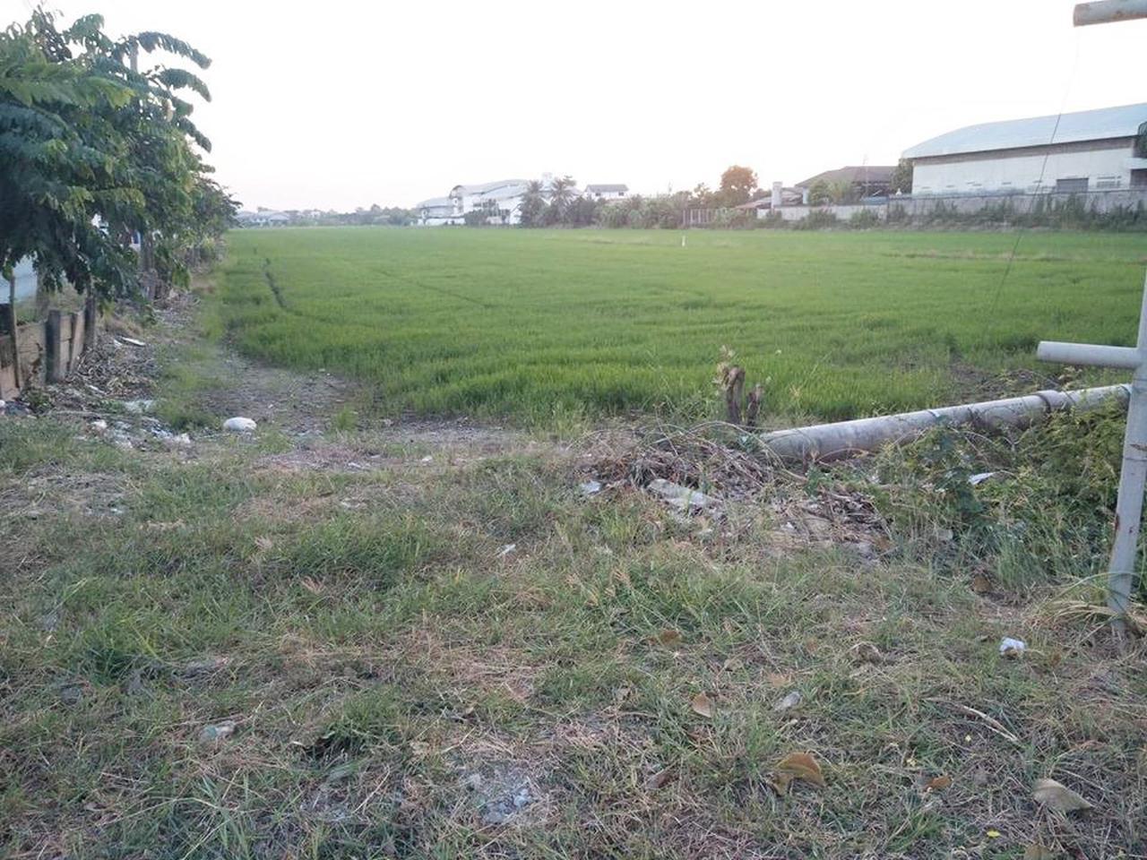 ขายที่ดินไทรน้อย 12 ไร่ เขตบางบัวทอง นนทบุรี ติดถนนบ้านกล้วย-ไทรน้อย เส้น 1013 อยู่ในเขตพื้นที่สีเหลือง เห รูปที่ 6