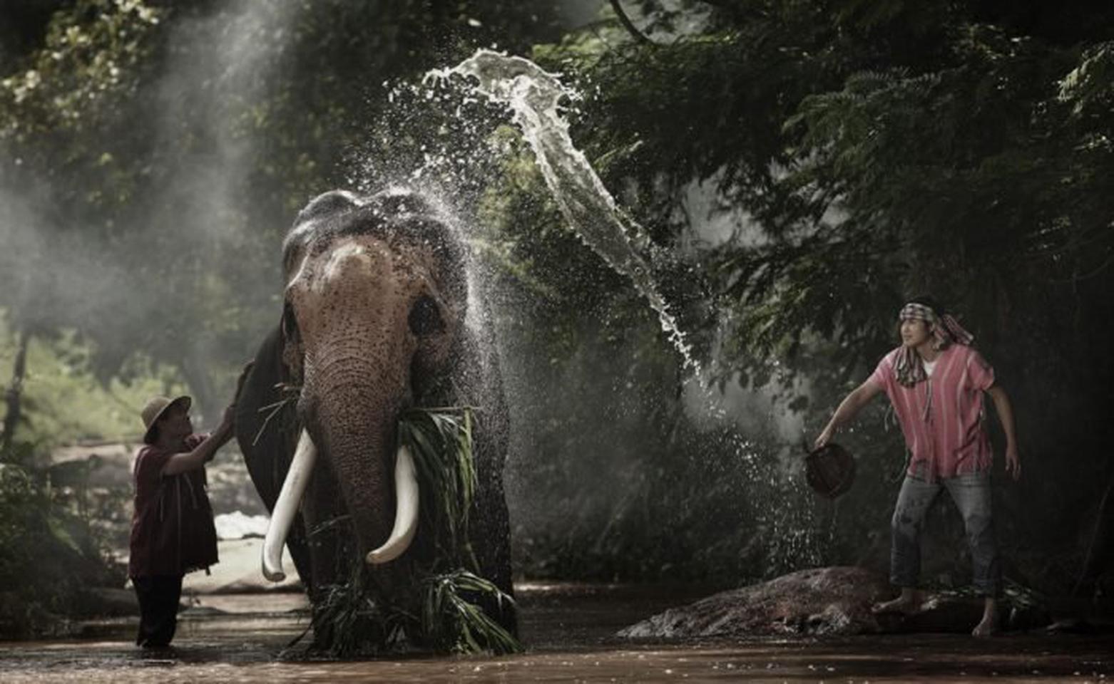 ปางช้างแม่แตง 1 วัน หลากหลายกิจกรรมสำหรับวันหยุด รูปที่ 1