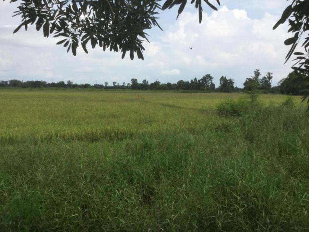 ขายที่ดิน อำเภอพนัสนิคม จังหวัดชลบุรี ติดถนนเมืองเก่า รูปที่ 5
