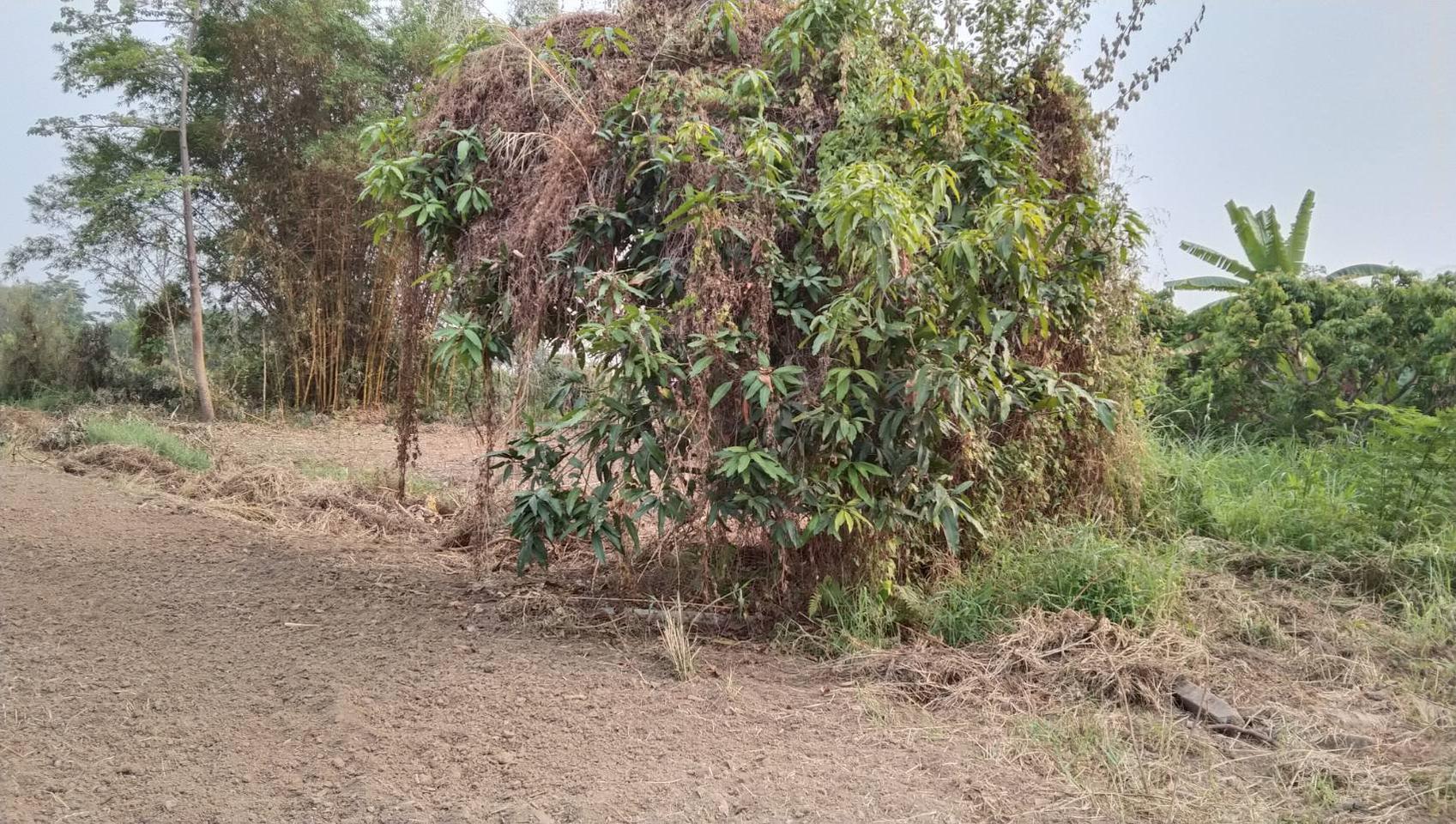 ขายที่ดิน สำหรับที่อยู่อาศัย และทำการเกษตร รูปที่ 5