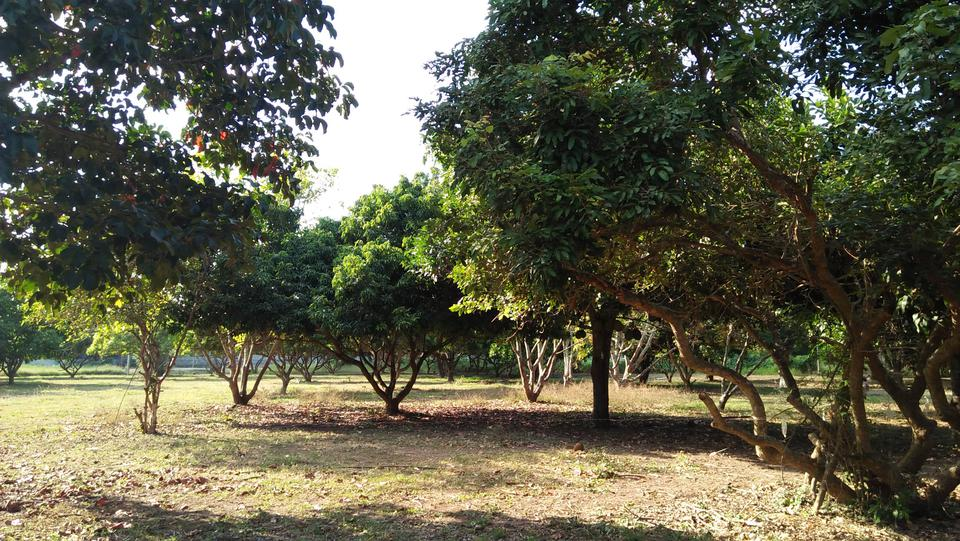 LAND THE FOREST & FARMS VERY NATURAL รูปที่ 3
