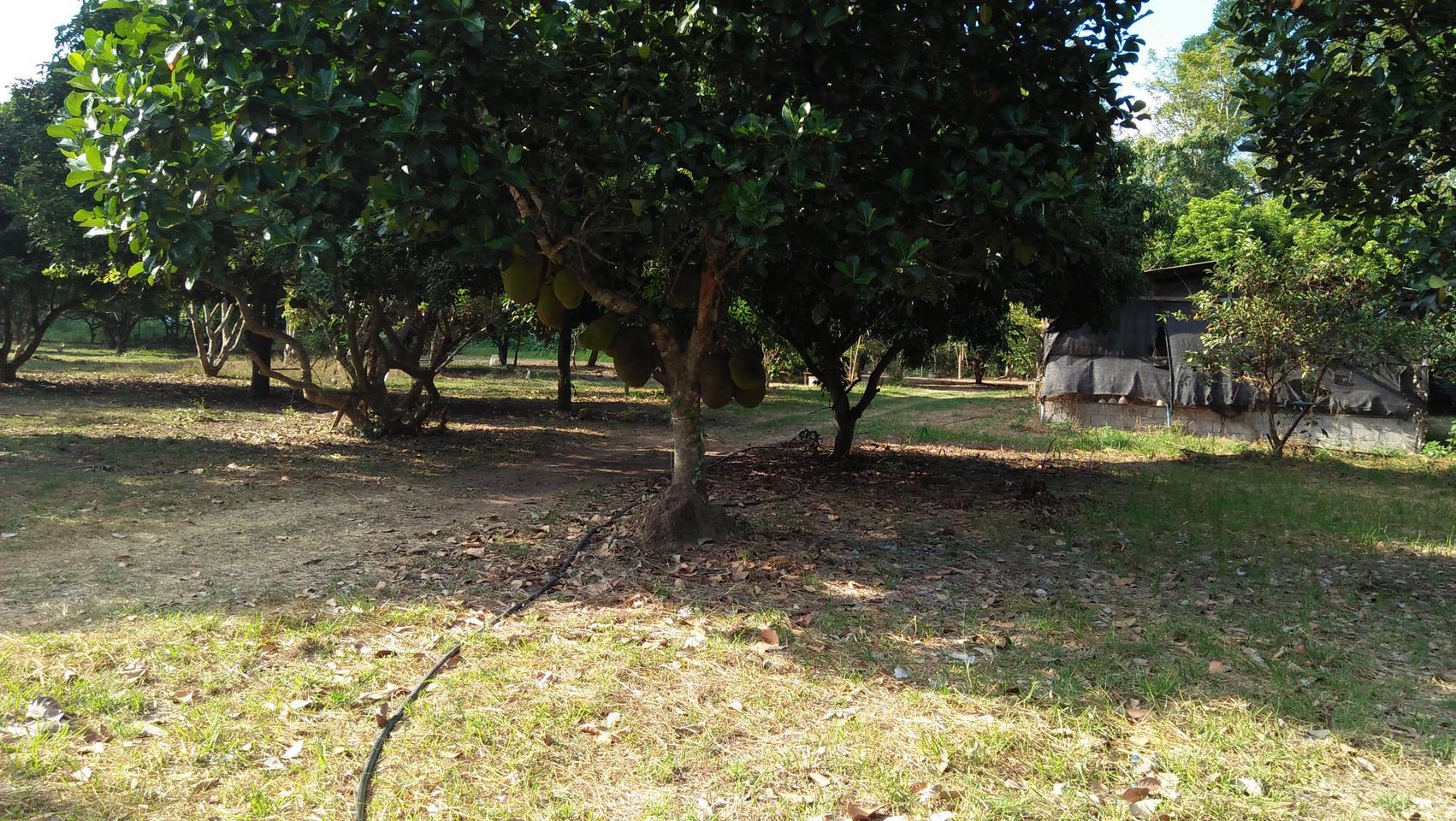 ที่ดินพร้อมสวนขนาดใหญ่ ติดห้วยลำธาร แหล่งธรรมชาติ น่าอยู่มาก รูปที่ 5