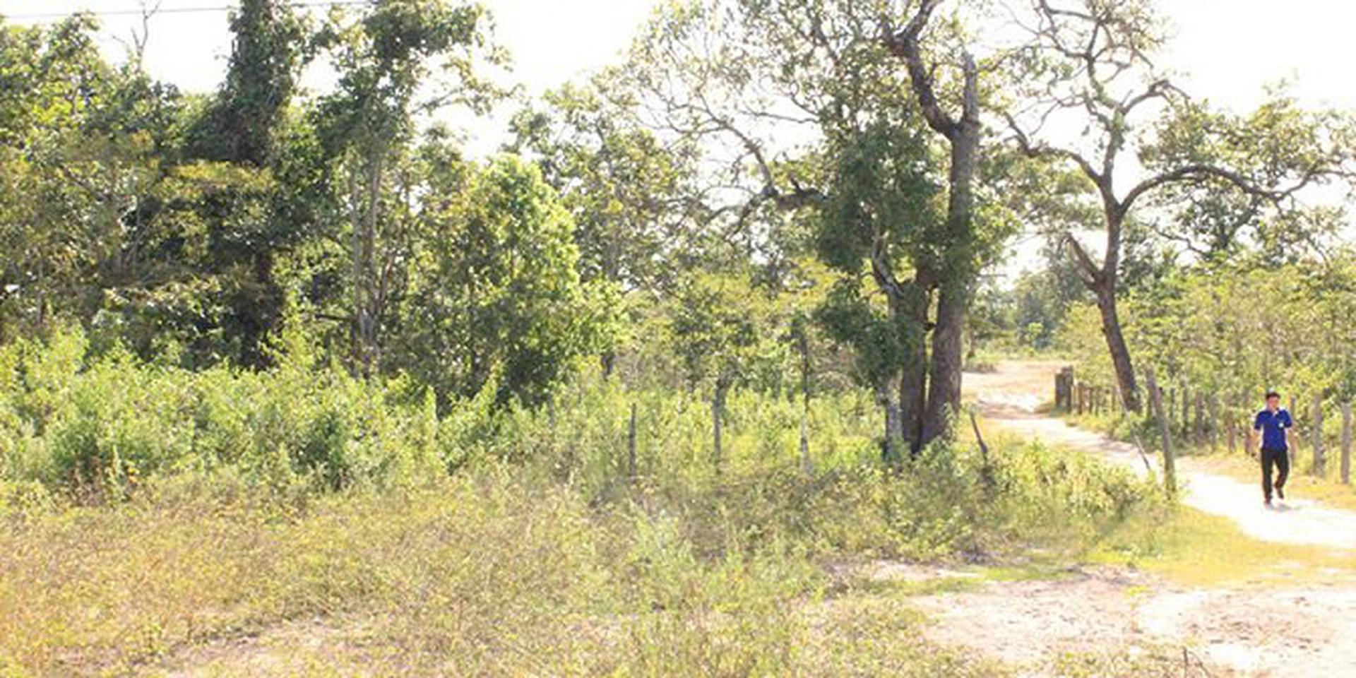 ที่ดินแขวงสะหวันนะเขต สปป.ลาว 106 ha รูปที่ 1