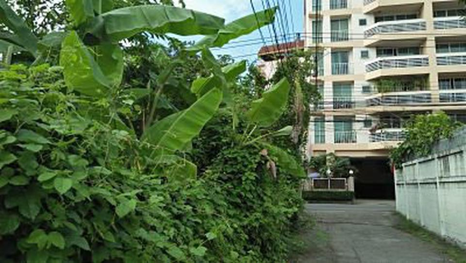 Rent land 404 sqm. closed road in the soi the tree covered s รูปที่ 4