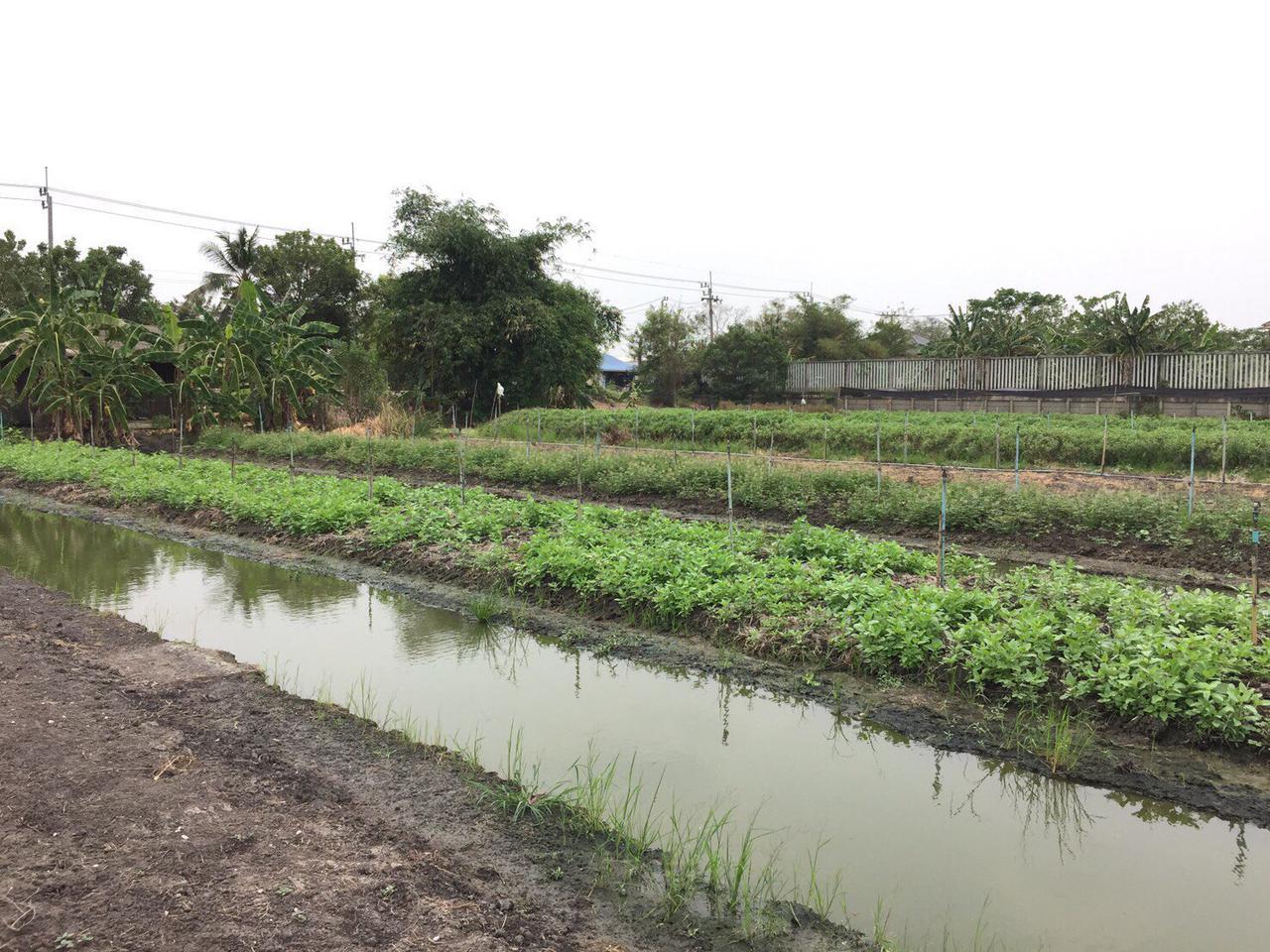 ขายที่ดินเปล่า 279 ตรว ราคาถูก บางใหญ่ นนทบุรี  รูปที่ 4