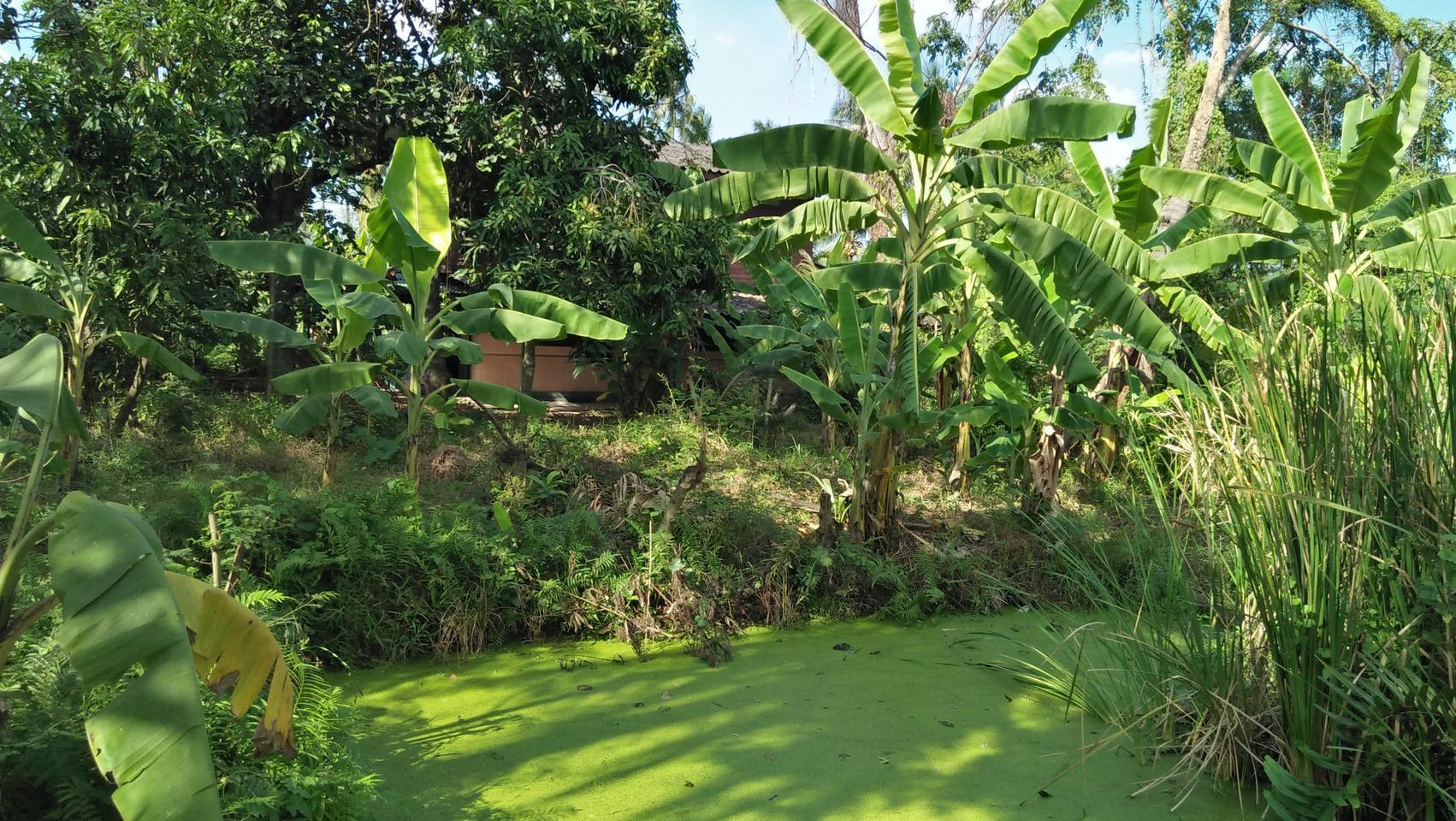 ที่ดินพร้อมบ้านเล็กๆสวนไร่กว่าใกล้แหล่งน้ำและเงียบสงบ ชานเมื รูปที่ 1