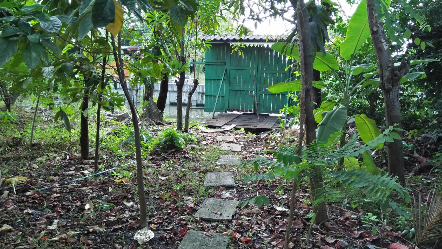 ที่ดินพร้อมบ้านเล็กๆสวนไร่กว่าเหมาะทำบ้านสวนใกล้คลอง ถนน ไร่ รูปที่ 3