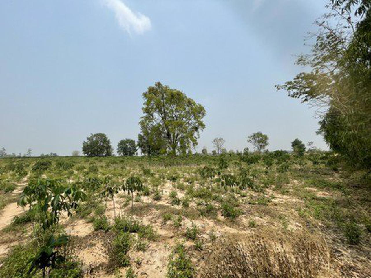 ขายที่ดินเปล่า บ้านโนนรัง จังหวัดขอนแก่น เนื้อที่ 29 ไร่ 3 งาน 30 ตารางวา รูปที่ 3