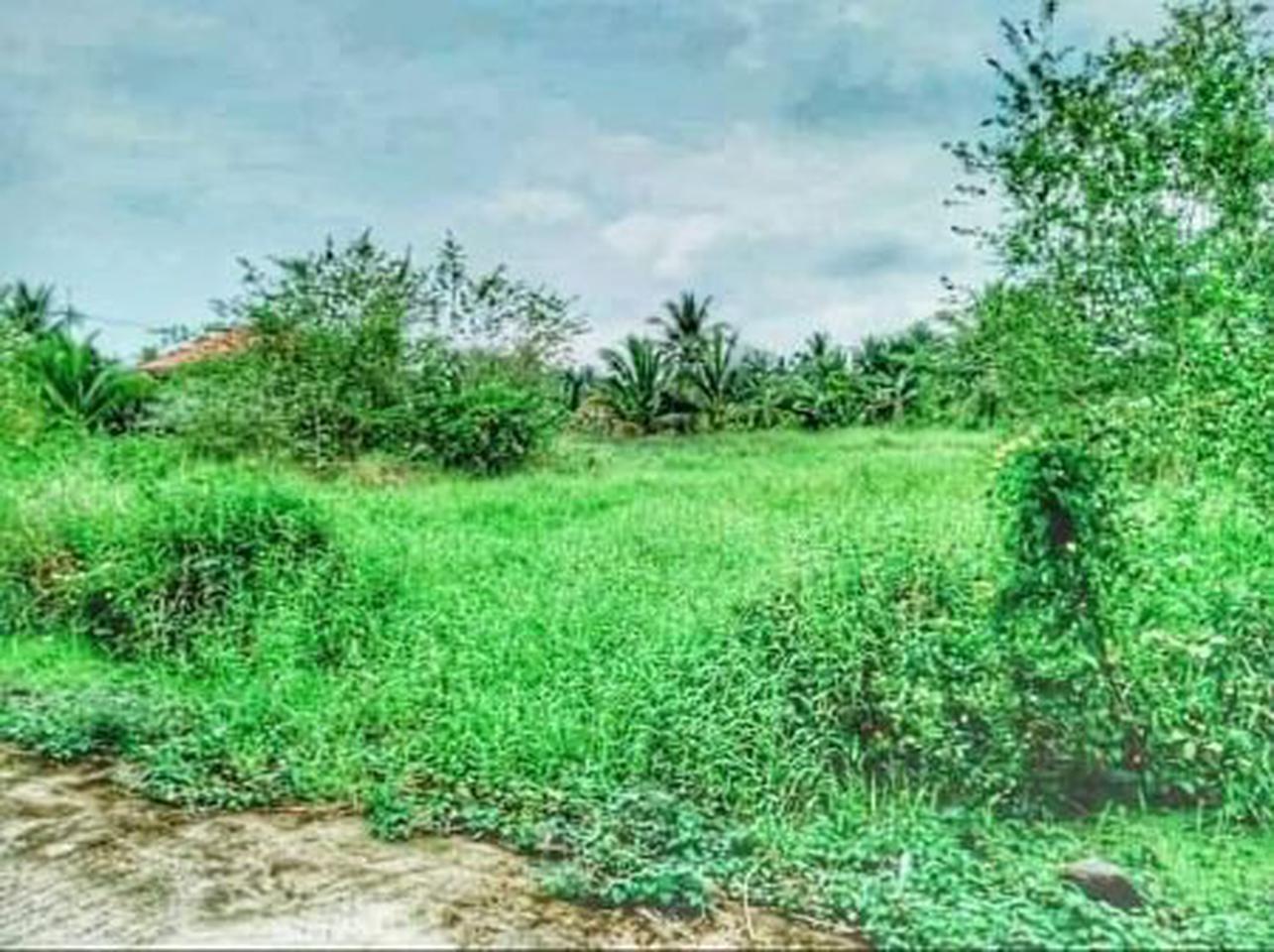 ขาย  ที่ดิน ที่ดินแบ่งล็อก ขายถูก ที่ดินเปล่า แบ่งล็อกขาย 54ตรว  ลดสุด ๆ ราคานี้ ถึงสิ้นเดือน มีนาคม 2564 เท่านั้น รูปที่ 1