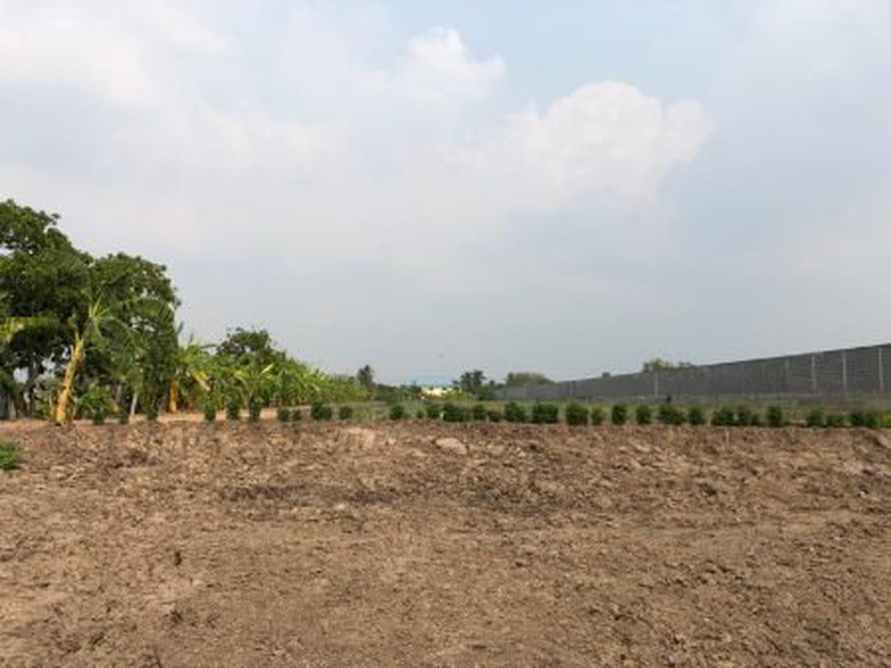 ขาย  ที่ดิน ที่สวยทำเลดี ที่ดินแบ่งขาย 100ตรว  ที่ดินสวยที่คุณสามารถเป็นเจ้าของได้ รูปที่ 5