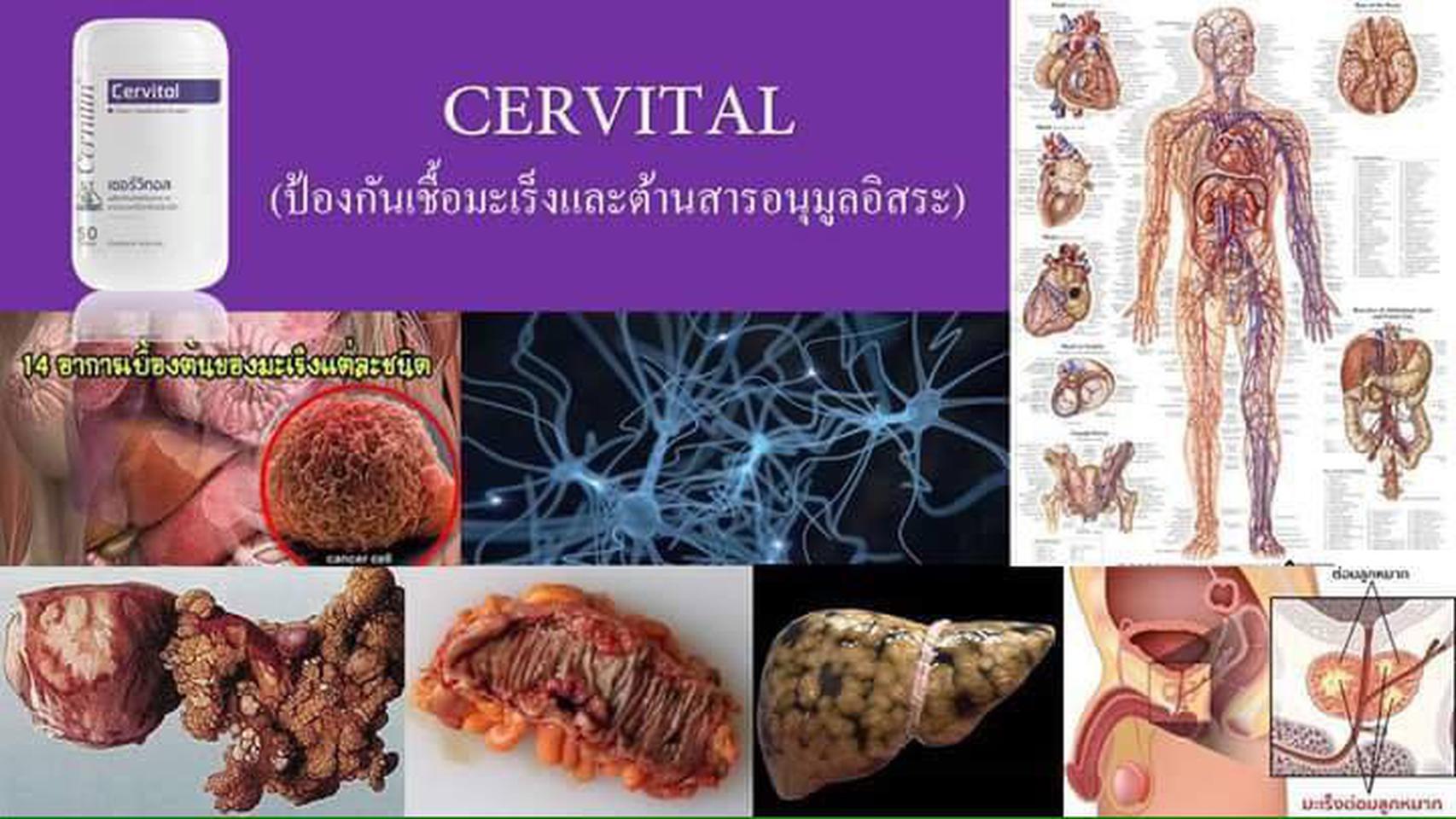 CERVITAL เซอร์วิทอล (สีม่วง),บำรุงผิวพรรณ, บำรุงรากผม,ฟื้นฟู รูปที่ 6