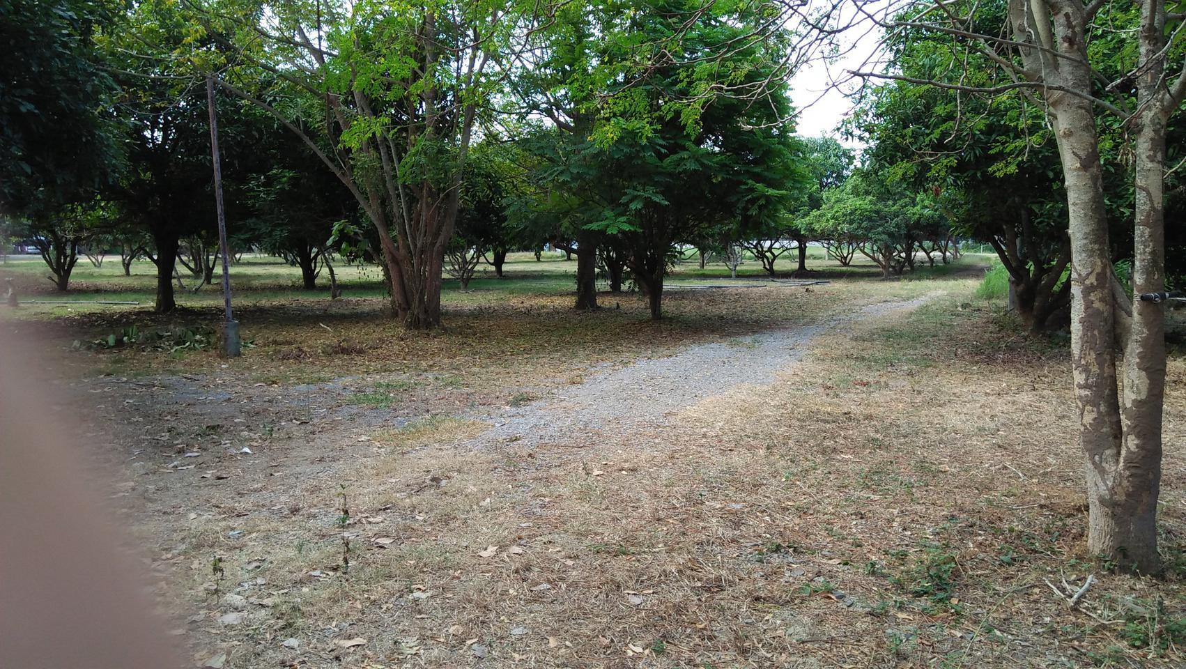 ที่ดินพร้อมสวนขนาดใหญ่ ติดห้วยลำธาร แหล่งธรรมชาติ น่าอยู่มาก รูปที่ 1