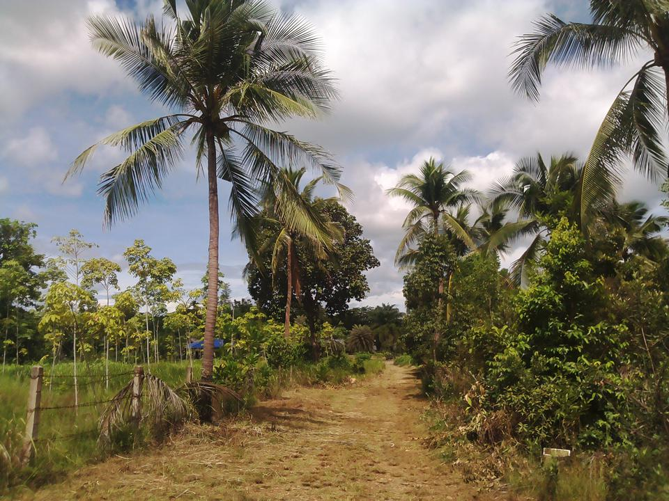 Sale Land 2 Rais close beach just 150 m.suitable for retirement very peacefully greenery รูปที่ 2