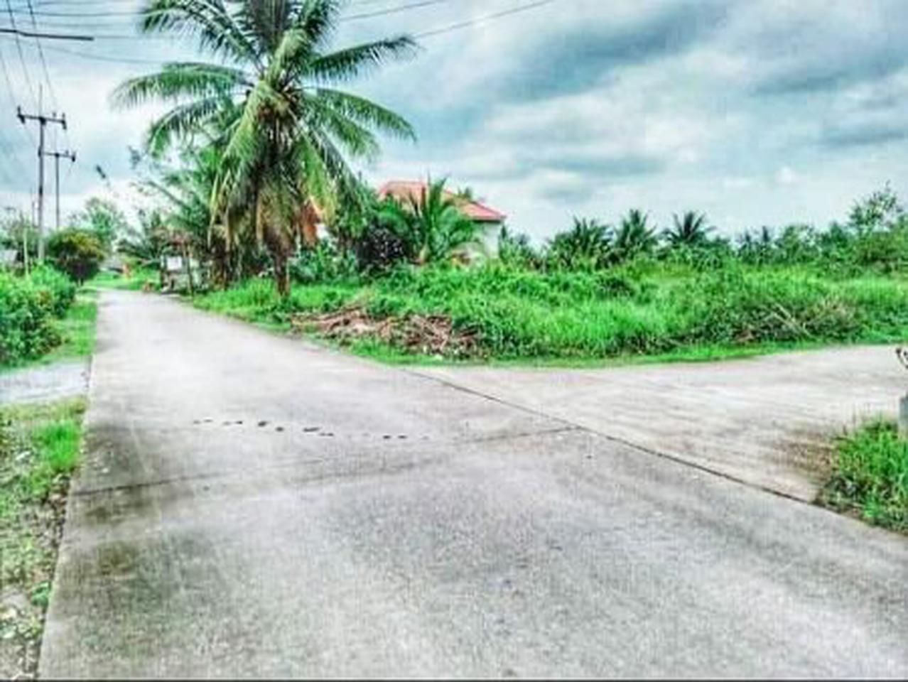 ขาย  ที่ดิน ที่ดินแบ่งล็อก ขายถูก ที่ดินเปล่า แบ่งล็อกขาย 54ตรว  ลดสุด ๆ ราคานี้ ถึงสิ้นเดือน มีนาคม 2564 เท่านั้น รูปที่ 5
