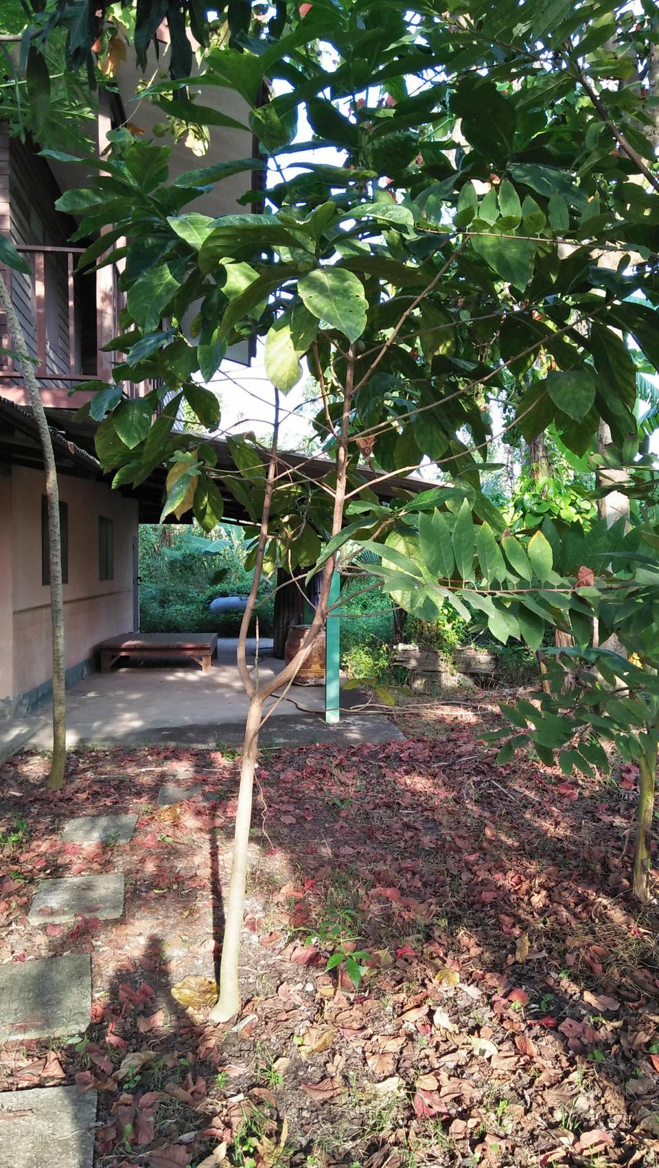 ที่ดินพร้อมบ้านเล็กๆสวนไร่กว่าเหมาะทำบ้านสวนใกล้คลอง ถนน ไร่ รูปที่ 1