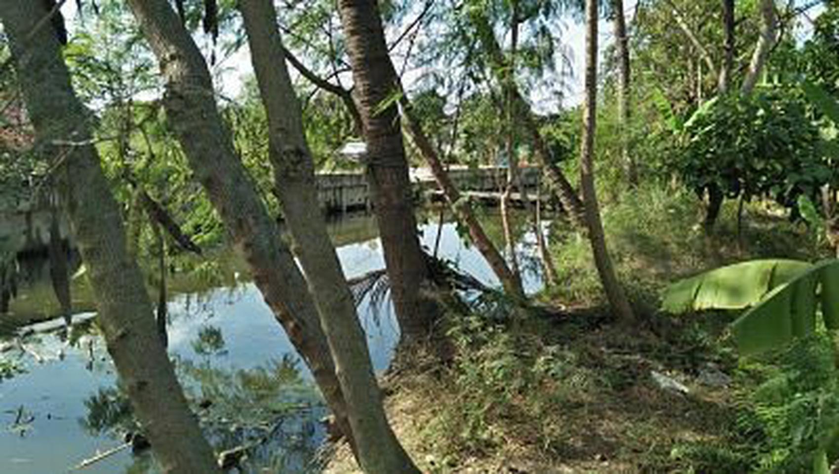 ที่ดินสวนป่าธรรมชาติติดลำคลอง ร่มรื่น บรรยากาศชานเมือง โฉนด  รูปที่ 5