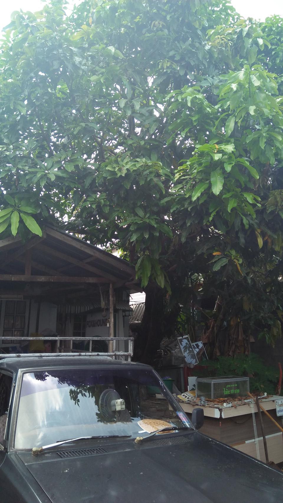 ขายบ้าน เนื้อที่ดิน 80 วา ย่าน หนามแดง-สำโรง ถนนเทพา รูปที่ 4