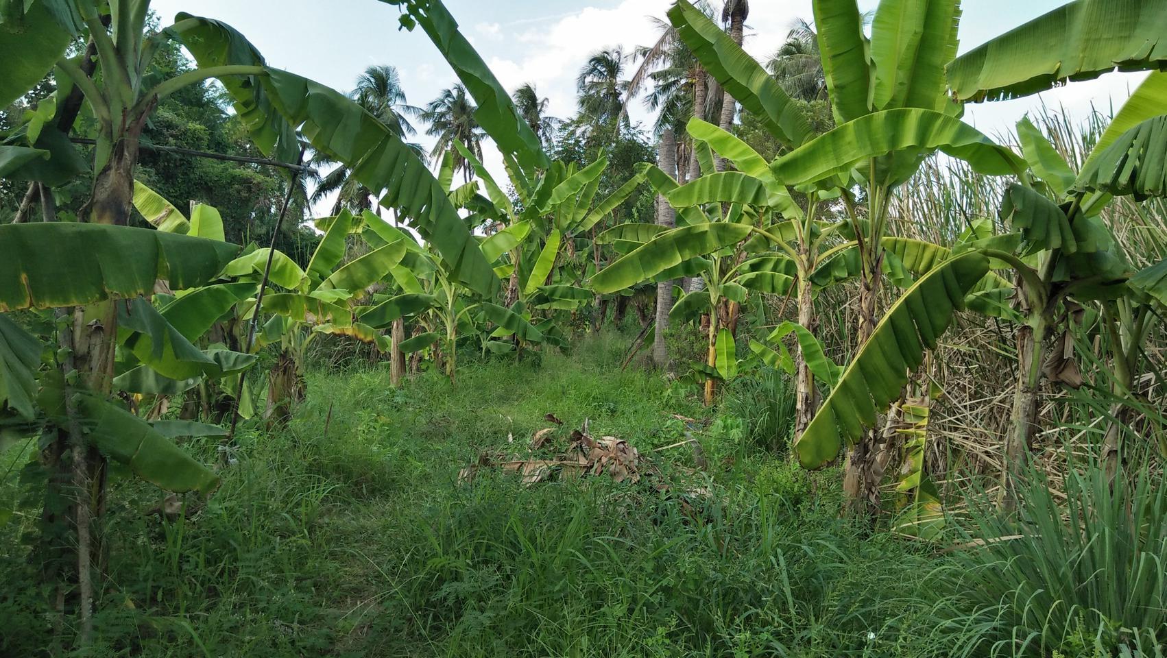 ที่ดินพร้อมบ้านเล็กๆสวนไร่กว่าใกล้แหล่งน้ำและเงียบสงบ ชานเมื รูปที่ 3