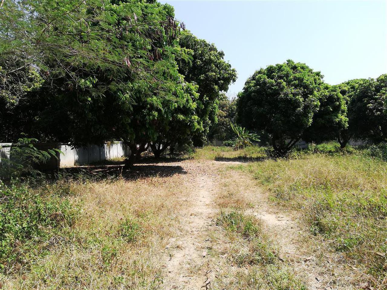 SRP01ขายที่สวน2-2-05.7ไร่ติดทางสาธารณประโยชน์ที่เชื่อมกับถนน รูปที่ 6