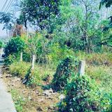 ขาย/ ให้เช่าที่ดิน ที่ดินติดถนน  2-1-30 ต.ล้อมแรด อ.เถิน จ.ลำปาง Land for sale and rent 2-1-30 Rai Lampang