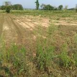 ขาย  ที่ดิน ราคาถูก ที่ดินแม่สาย 1ไร่ 18ตรว  เหมาะสำหรับทำเกษตร 753000 บาท