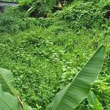 ให้เช่าที่ดินแปลงเล็กๆติดถนนในซอย พระโขนง แวดล้อมบ้านหรูและคอนโด
