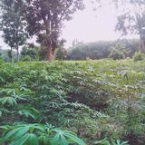 ขายที่ดิน เหมาะสำหรับ ปลูกสร้างที่อยู่อาศัย หรือทำการเกษตรครับ