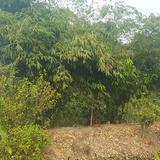 ขายที่ดิน เนื้อที่ 4-3-00 ไร่ บางใหญ่  จังหวัดนนทบุรี  ราคา 2 ล้านต่อไร่ โทร 0817071814