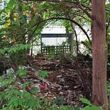ที่ดินเนื้อที่ดิน 101 ตารางวา  มีต้นไม้ปกคลุม ติดถนนในซอยให้