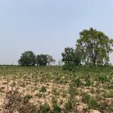 ขายที่ดินเปล่า บ้านโนนรัง จังหวัดขอนแก่น เนื้อที่ 29 ไร่ 3 งาน 30 ตารางวา