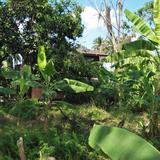 ขายบ้านสวน ท่ามกลางธรรมชาติ สามพราน ถนนพุทธมณฑลสาย 5