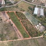 ขายที่ดินหลัง ม.ศิลปากร วิทยาเขตสารสนเทศเพชรบุรี
