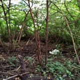 ให้เช่าที่ดินสภาพมีต้นไม้ปกคลุมเต็มติดถนนในซอย ร้อยวา เหมาะท