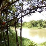ขายด่วน ที่ดินแปลสวย ติดแม่น้ำท่าจีน  ตำบลปากน้ำ จ.สุพรรณบุรี