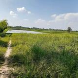 ขาย  ที่ดิน ราคาถูก ที่นา อ เพ็ญ อุดร 19ไร่ 2งาน 19.5ตรว  มีแหล่งน้ำในที่ดินมีถนนผ่าน